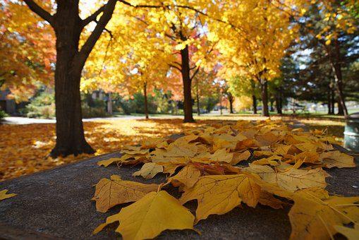 catholic Autumn