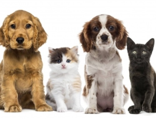 Animal Fair And Pet Blessing, October 7