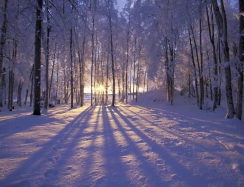 """The Light…Jesus Christ…"""
